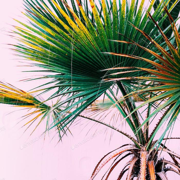 Palm on pink. Tropical design minimal fashion
