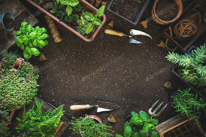 Composición con plantas y herramientas de jardinería