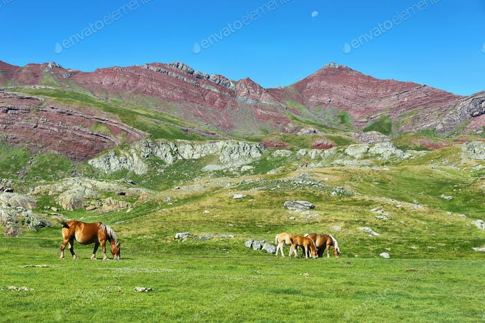 Horses grazing in Anayet plateau, Spanish Pyrenees, Spain.