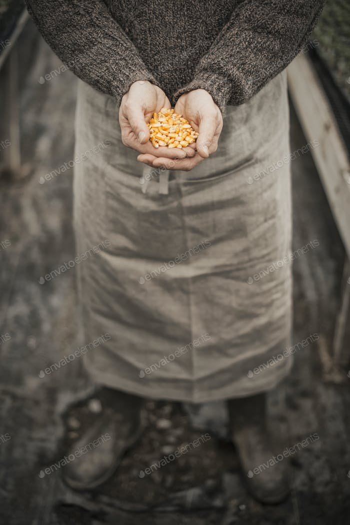 Spring Planting. A man holding a handful of plant seeds in his cupped hands.
