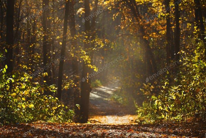 Wanderweg im Wald mit schönen Sonnenstrahlen