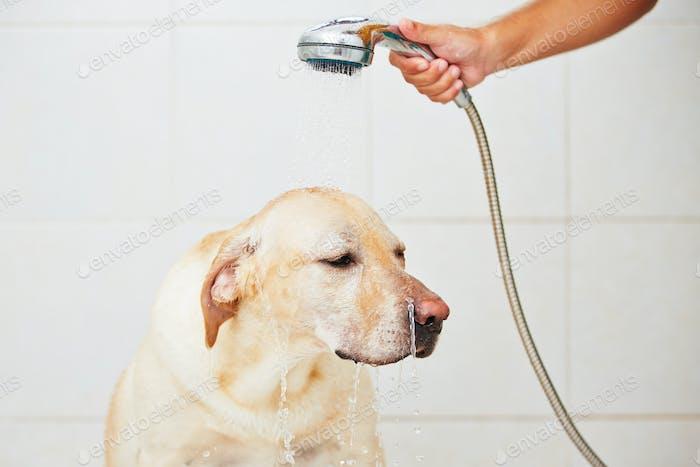 Hund im Bad