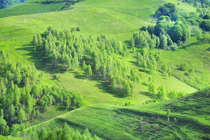 Picturesque rolling hills. Vibrant green spring landscape