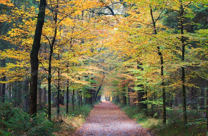 walking path in autumn forest
