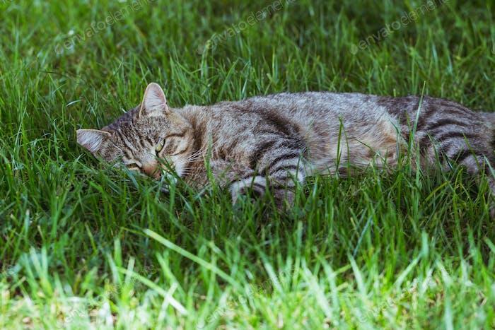 Katze im grünen Gras. Die Katze ruht aus.