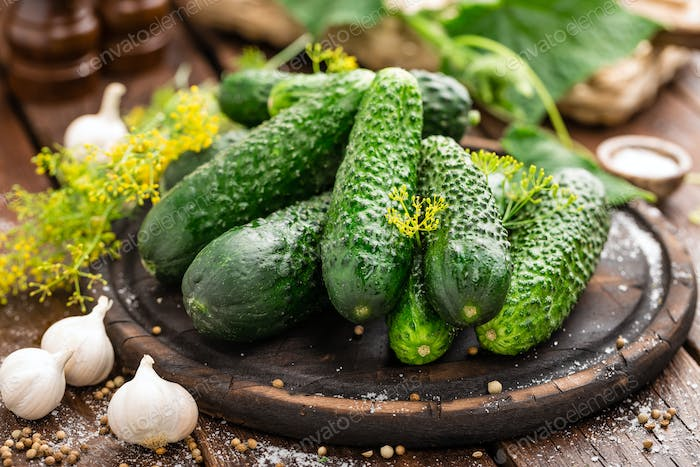 Fermenting cucumbers, cooking recipe salted or marinated pickles with garlic and dill
