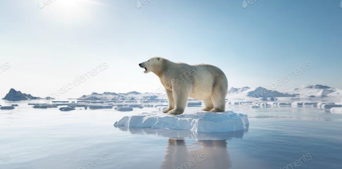 Oso polar en témpano de hielo. El iceberg derretimiento y el calentamiento global.