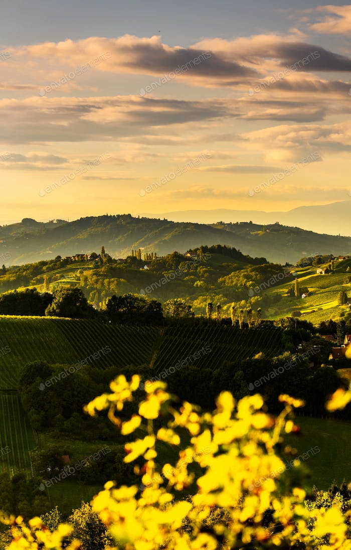 South styria vineyards landscape, near Gamlitz, Austria, Eckberg, Europe. Grape hills view from wine