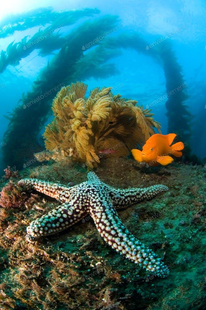 Ocean reef scenery