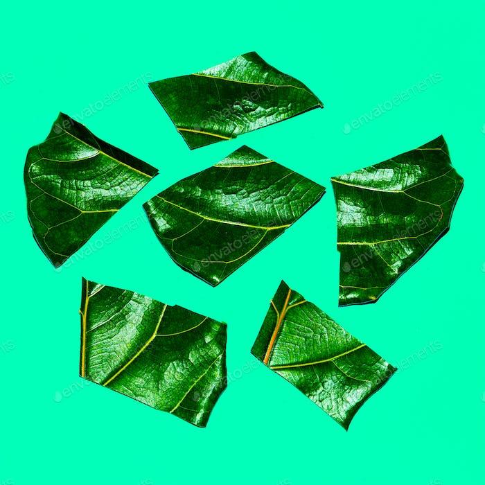 Half Leaf  Art. Green lover. Flat lay minimal