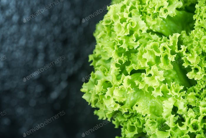 Fresh lettuce close up, border background