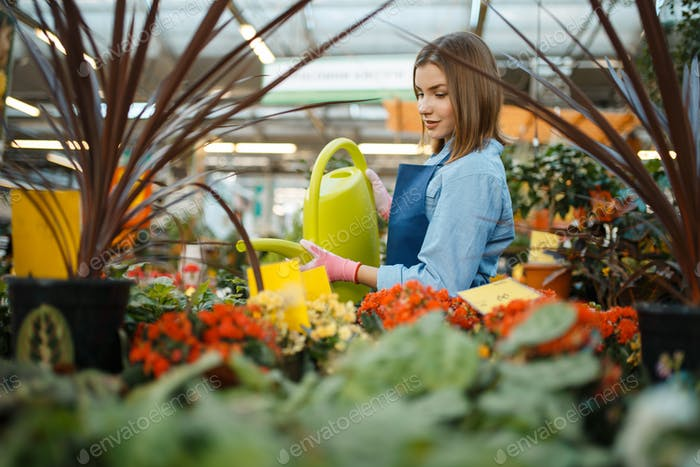 Female seller watering plants, florist store