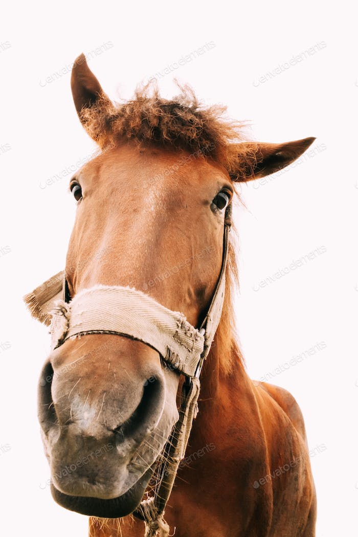 Funny Closeup Of Horse - Wide Angle