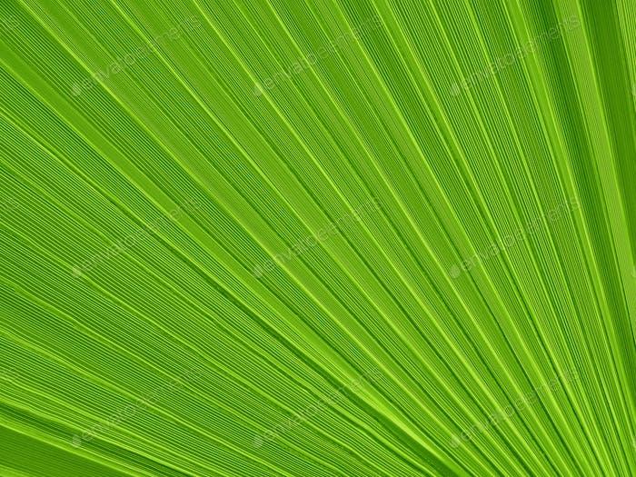Tropische Pflanze Blatt Nahaufnahme