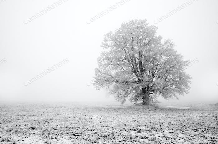 Nebel Tag