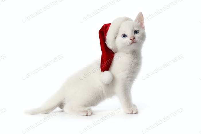 Cute white kitten with blue eyes and Christmas hat