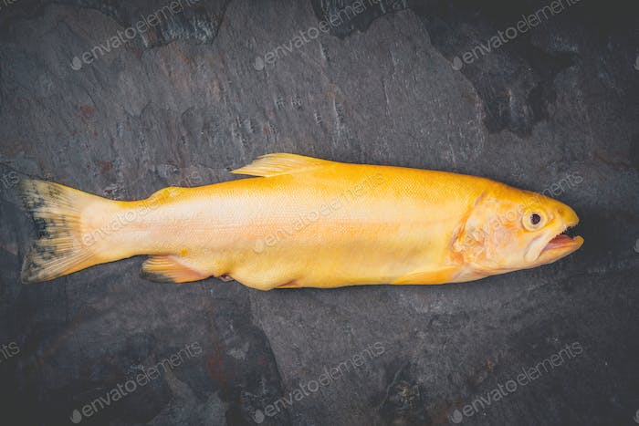 Raw golden trout on the dark stone background top view