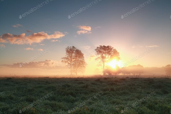 beautiful sunrise behind trees on grassland
