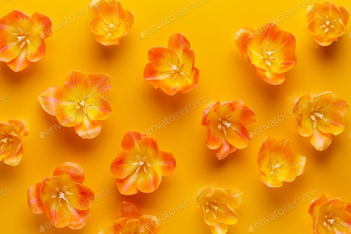 Gelbe Pastellfarben Tulpen auf dem gelben Hintergrund.