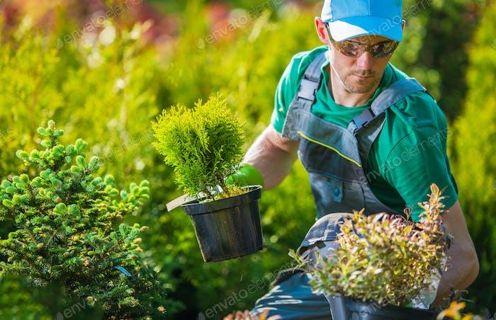 Male Nursery Worker Picks Plants In Pots For Customers.