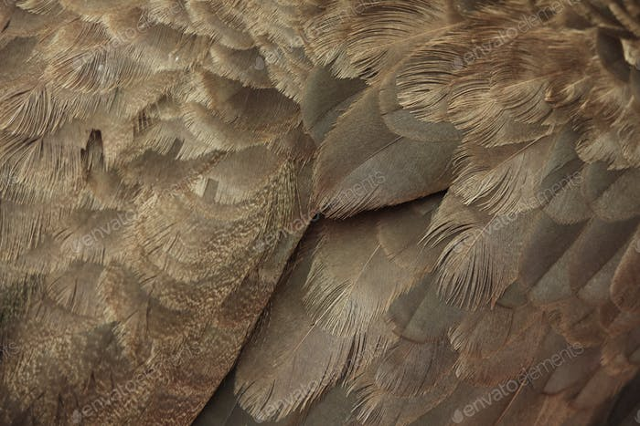 Close up of brown feather