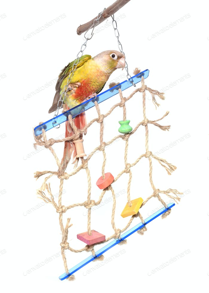 toy for parrot