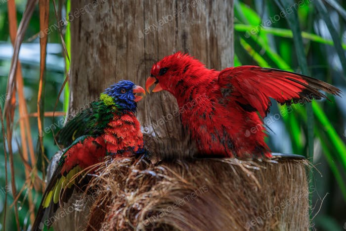 colorful parrots in Loro Park in Tenerife, Spain