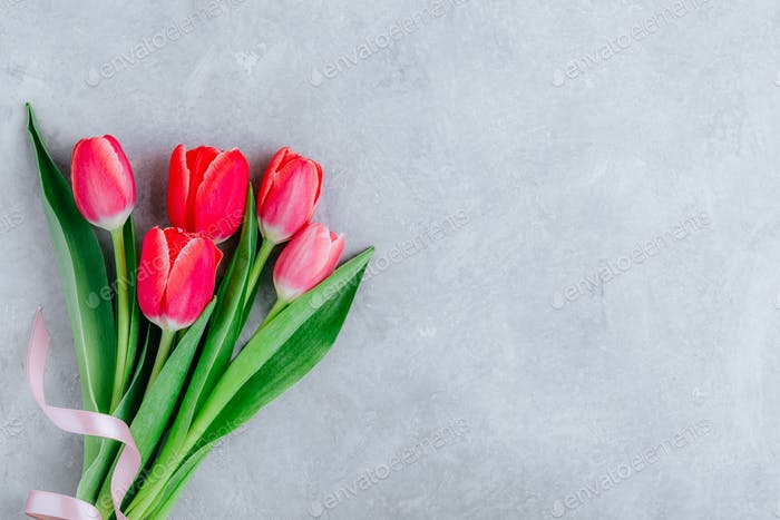 Pink Spring Tulips on gray stone concrete background