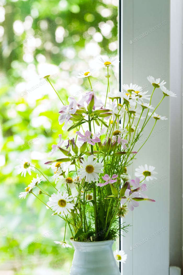 Field flowers of chemist's daisy near the window