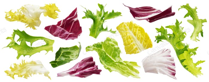 Mix of leaves with rucola, lettuce, radicchio, romano and green frize isolated on white background