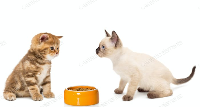 Kittens with a bowl of dry food
