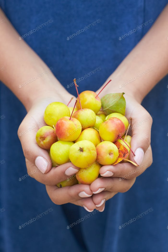 Close Up Of Woman Holding Crab Apples