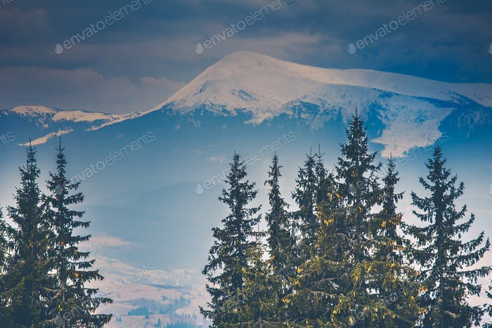 Snowy mountain peaks and pine trees