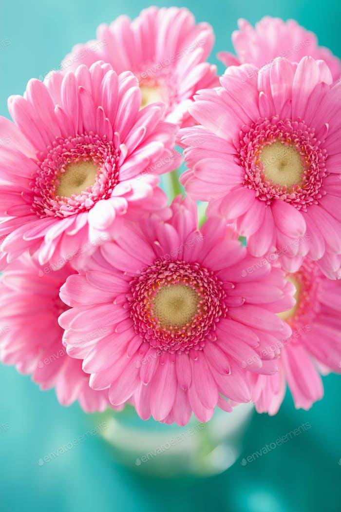 schöne rosa Gerbera Blumen Blumenstrauß in Vase