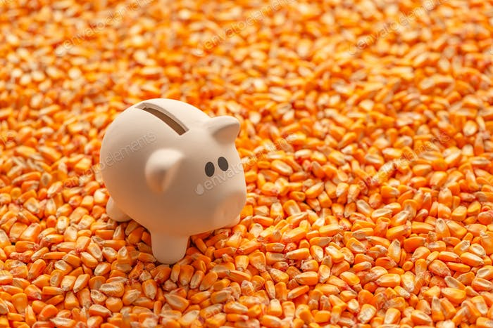 Piggy bank on pile of harvested corn seed