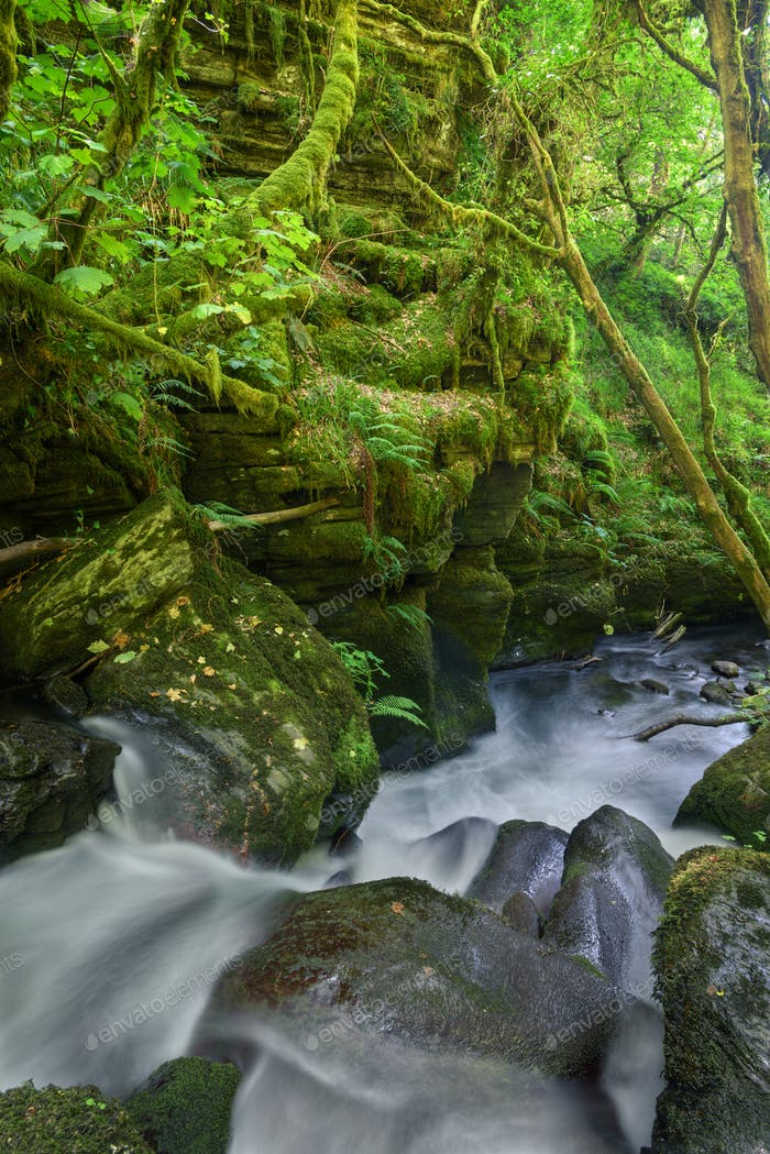 Moss and fern covered rock gorge and waterfalls