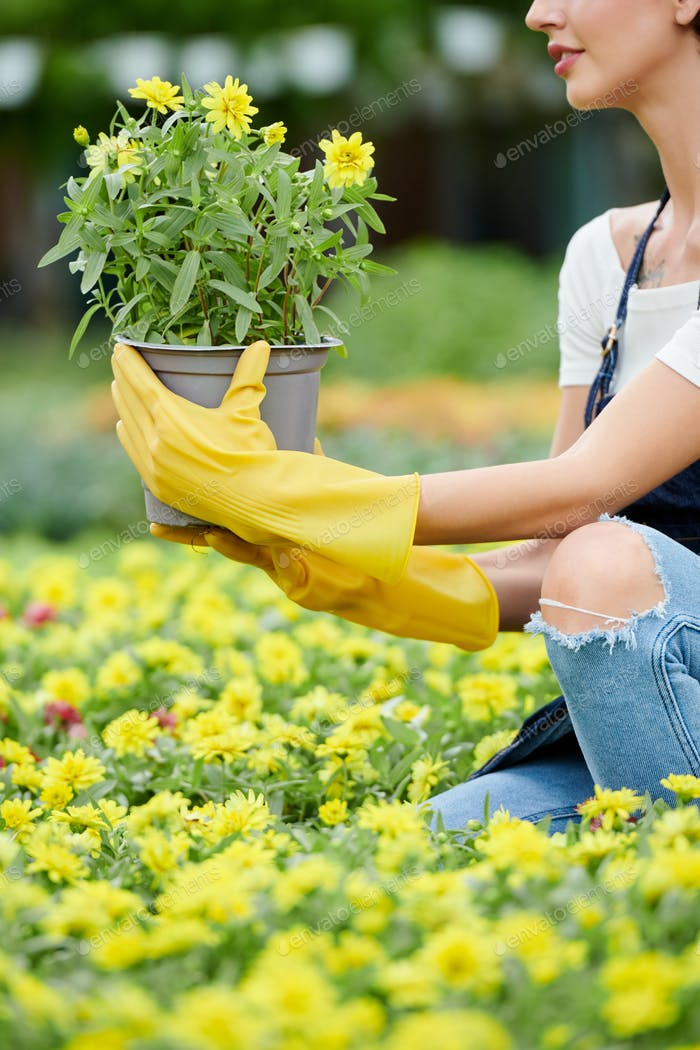 Woman choosing flowers in nursery garden