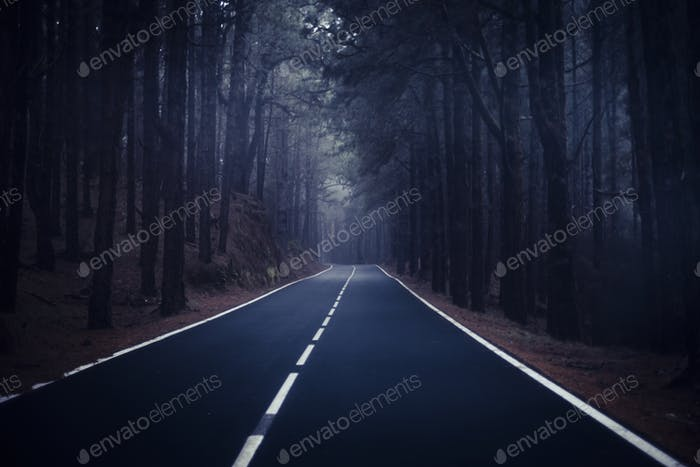 Long way road  at the mountain with pines forest and fog clouds in front and grey clear sky