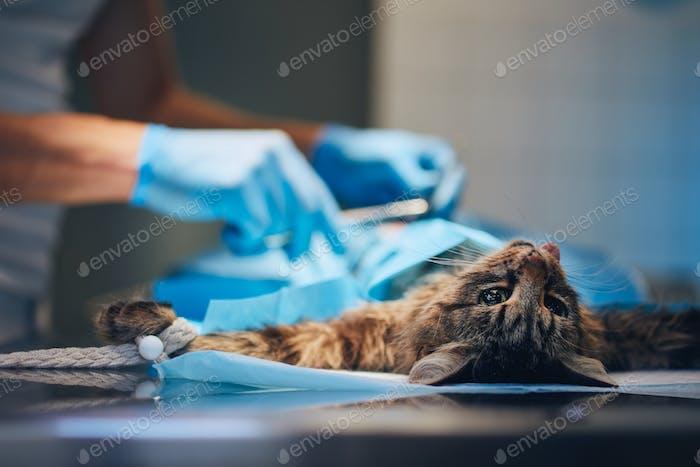 Katze in Tierklinik