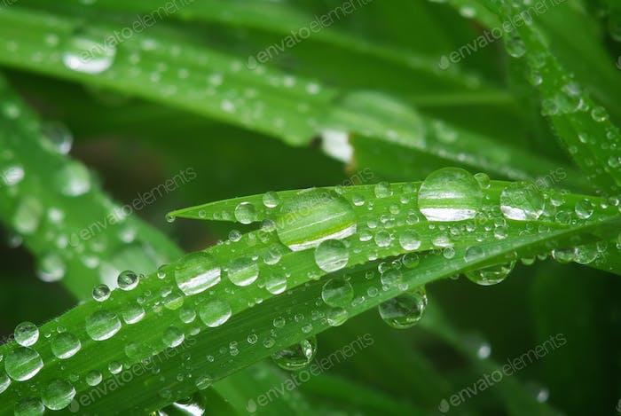 Makro von Regentropfen
