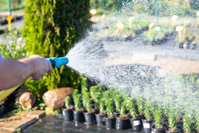 Gardener hand with garden hose watering plants, close up, sun light