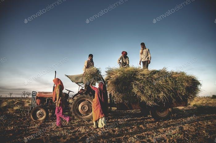 Indien Familie Faeming Ernte Ernte Konzept
