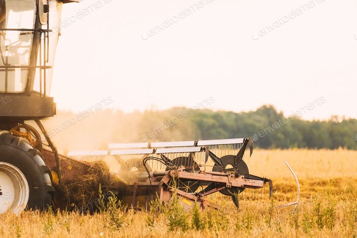 Combine Harvester Working In Field. Harvesting Of Wheat In Summer Season. Agricultural Machines