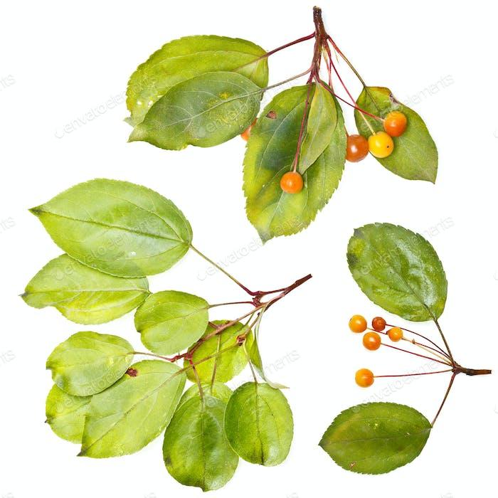 Autumn orange berries