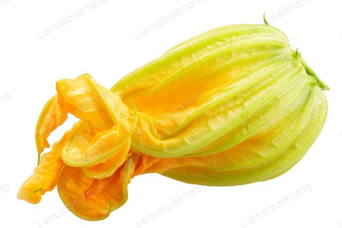 Zucchini squash c. pepo blossom, paths
