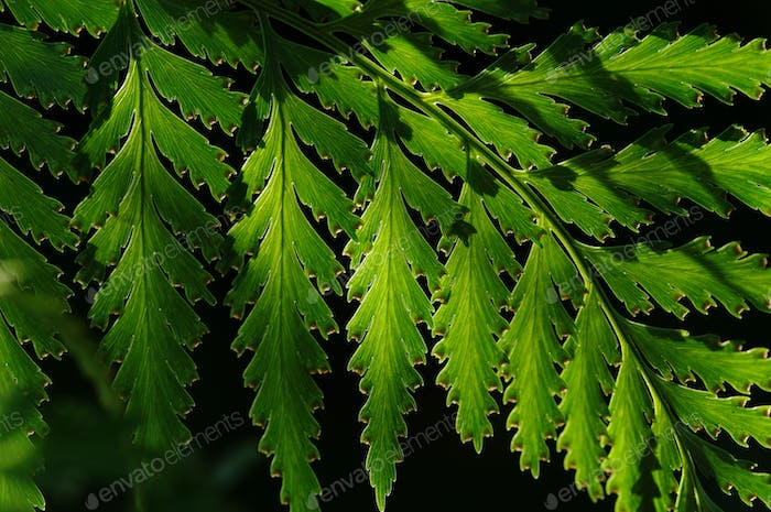 Green fern leaf with light and shadow