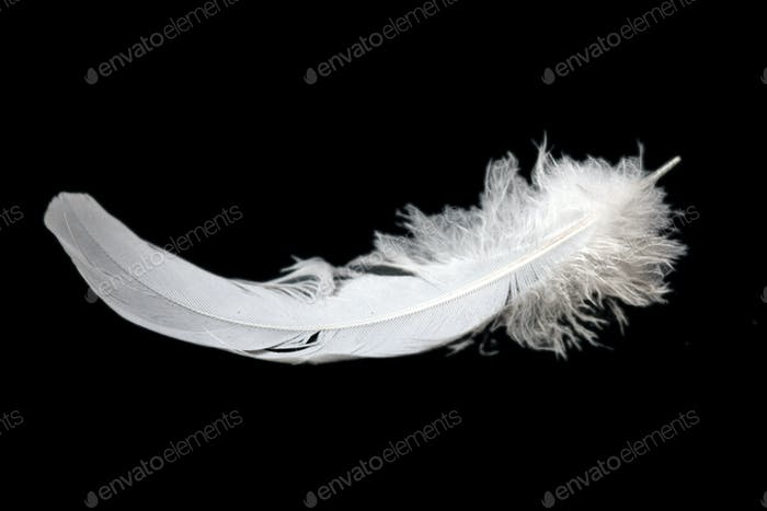 feather on black background