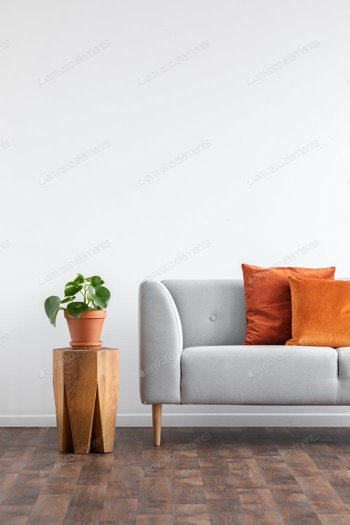 Orange pillows on grey sofa next to plant on wooden table in gre photo by  bialasiewicz on Envato Elements