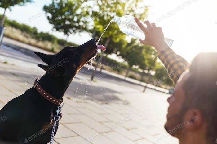 Perro de agua potable de la botella de plástico en el parque.