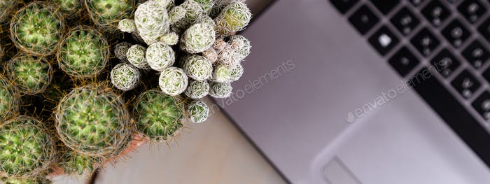 Banner of Flat lay of cactus and laptop computer